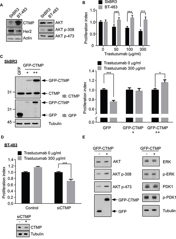 CTMP contributes to trastuzumab resistance.