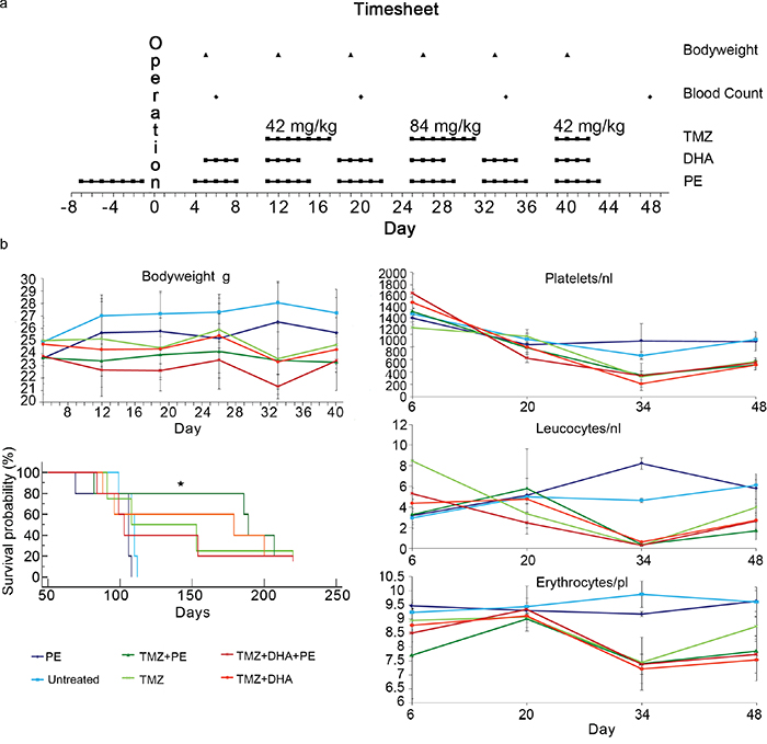 PE shows synergistic anti-tumor activity when combined with TMZ in vivo but does not protect against chemotherapy-induced toxicity.