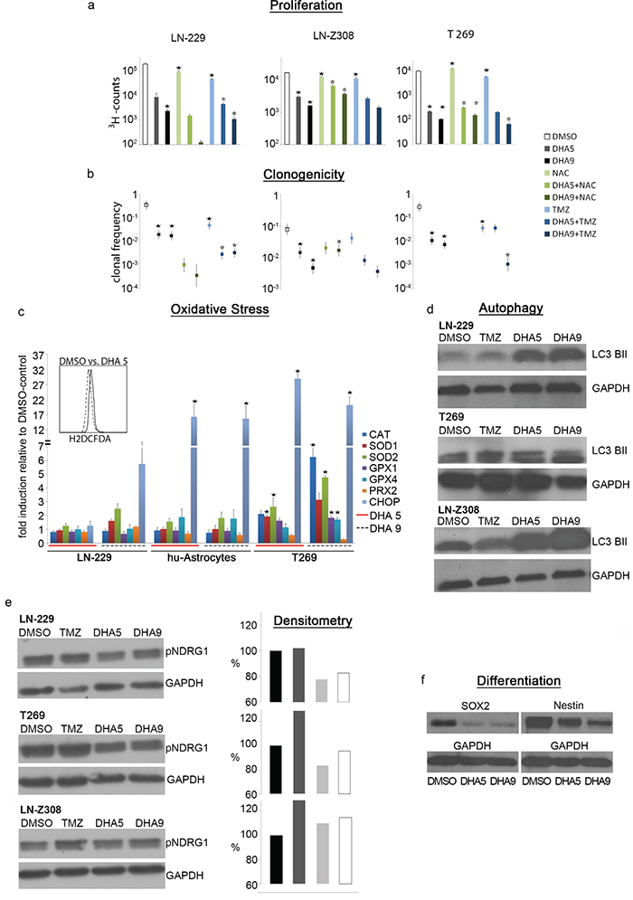 DHA exerts ROS-dependent anti-tumor activity.