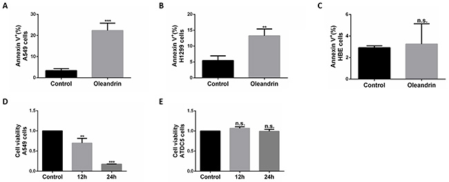 Oleandrin effectively induced cell death in A549 and H1299 cells, but not in HBE and ATDC5 cells.