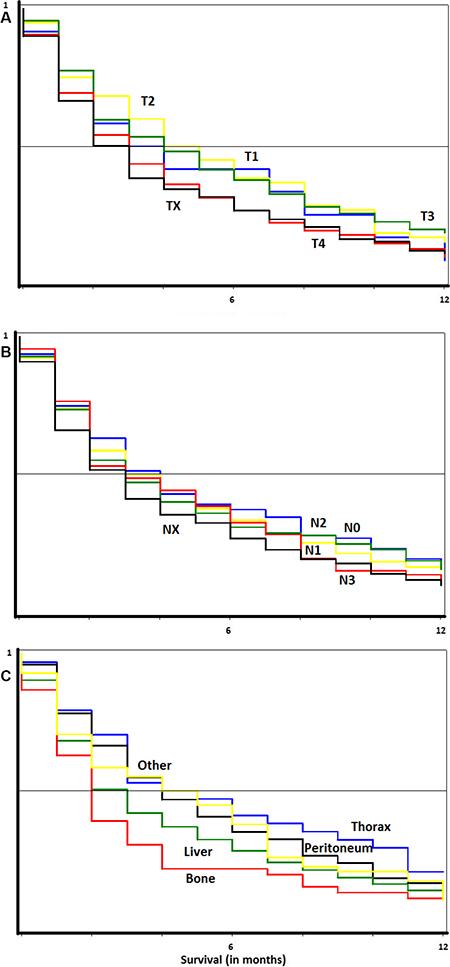 Survival curves in metastatic gastric cancer.