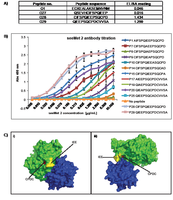 Identification of seeMet 2 main epitope.