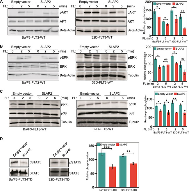 SLAP2 expression suppresses FLT3 downstream signaling.