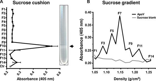 Fibrin generation assays of sucrose purified B16-F1-derived ApoV.