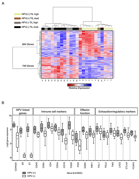 Differentially expressed genes between HPV(+) and HPV(−) tumors.
