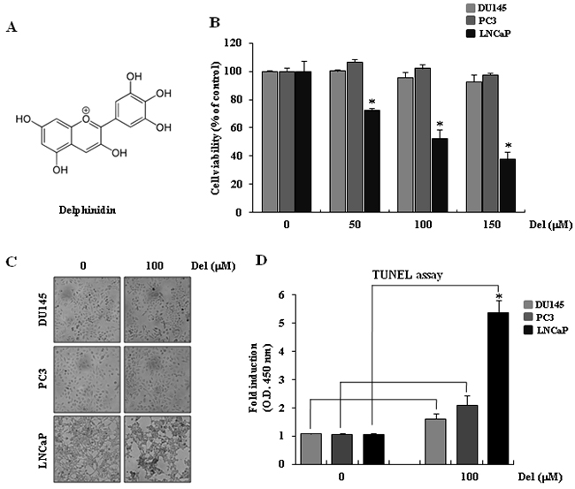 Delphinidin induces apoptosis in human prostate cancer LNCaP cells.