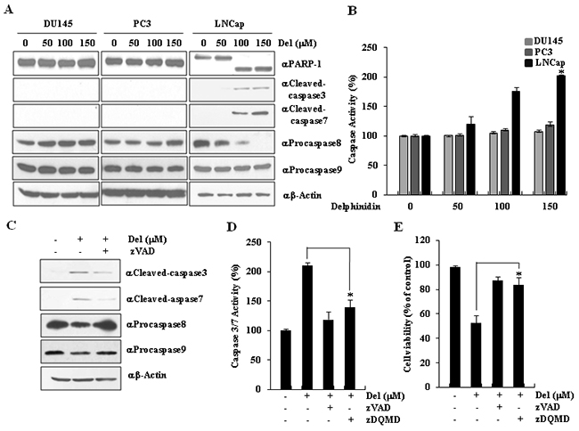 Delphinidin induces caspase-dependent apoptosis in LNCaP cells.