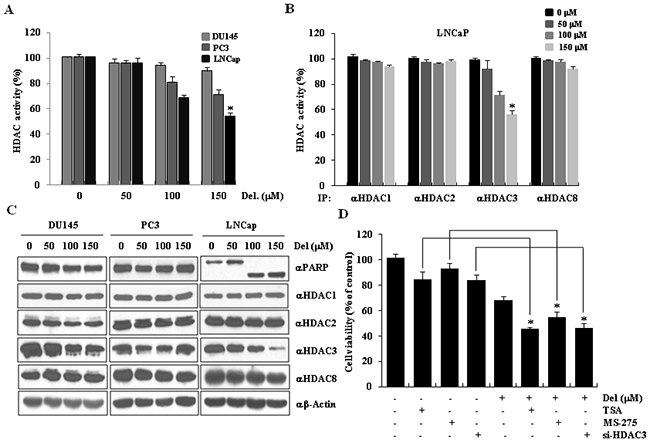 HDAC3 activity was downregulated during delphinidin-induced apoptosis in LNCaP cells.