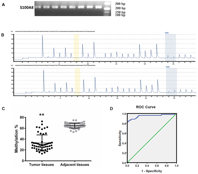 Methylation lever analysis of S100A8.