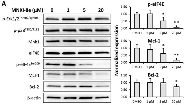 Signaling pathway analysis of Mnk inhibition.