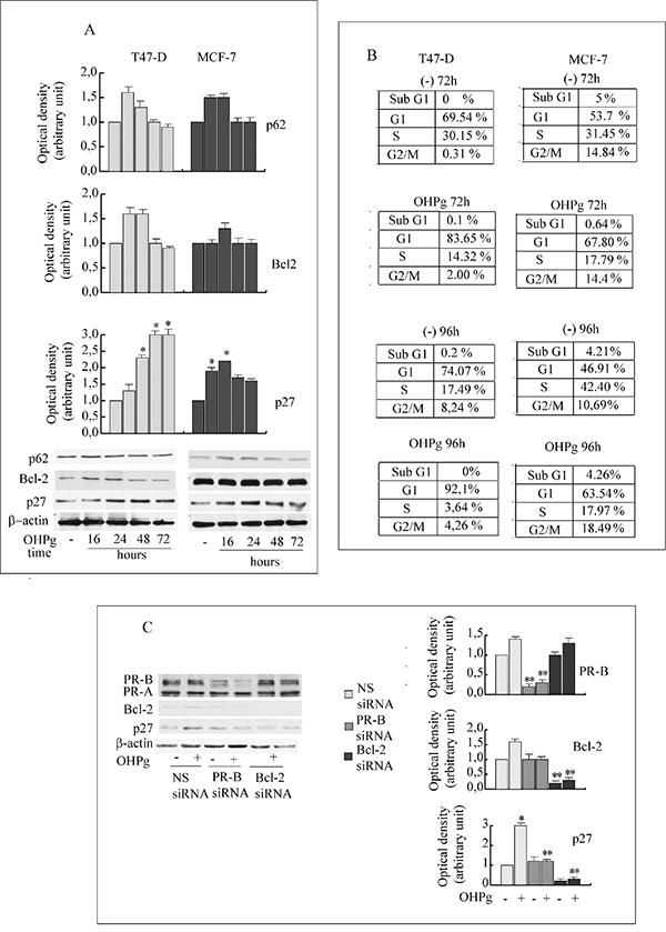 OHPg/PR-B induce irreversible G1 arrest in breast cancer cells.