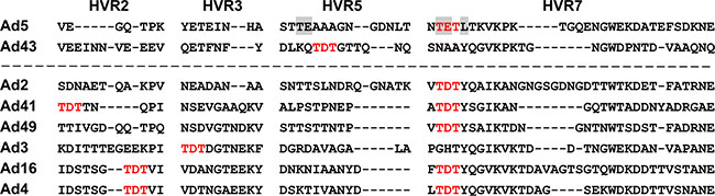 Alignment of Ad43 hexon HVRs 2, 3, 5, and 7 with HVRs of FX-binding hexons.