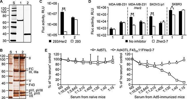 Increased expression of the F43S511FHer2:7 chimera yields an Ad43 vector that is capable of efficient Her2-specific transduction and is not neutralized by anti-Ad5 Abs.