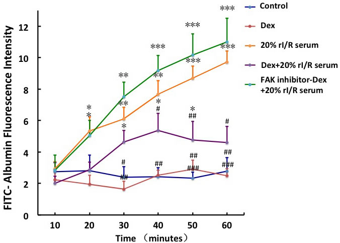 The effect of FAK on the rI/R serum induced hyper-permeability of pulmonary endothelial monolayers.