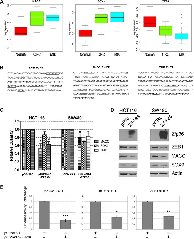 Validation of three novel ZFP36 target genes involved in EMT.