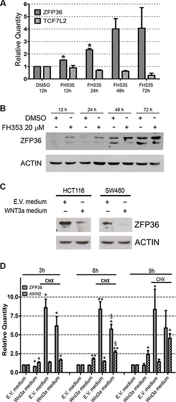 Wnt/β-catenin pathway inversely regulates ZFP36 expression.
