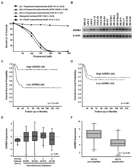 Growth inhibition is specific to β2-blockers and β2-AR is expressed in NB.