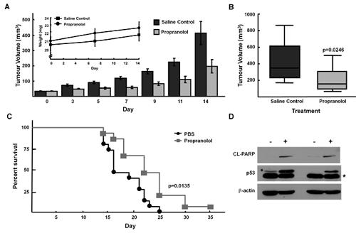 Propranolol inhibits neuroblastoma tumor growth