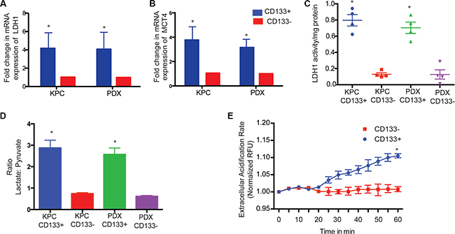 CD133+ cells have increased LDH expression and activity.