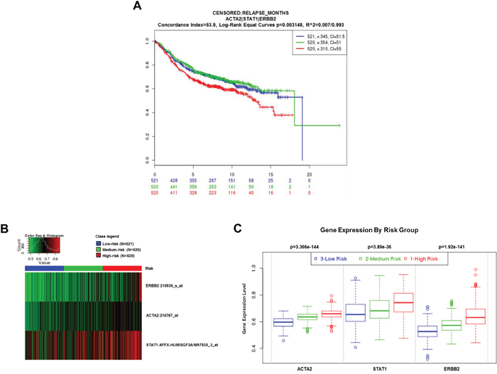 Clinical significance of ACTA2, STAT1, and HER2 expression in breast cancer patients.