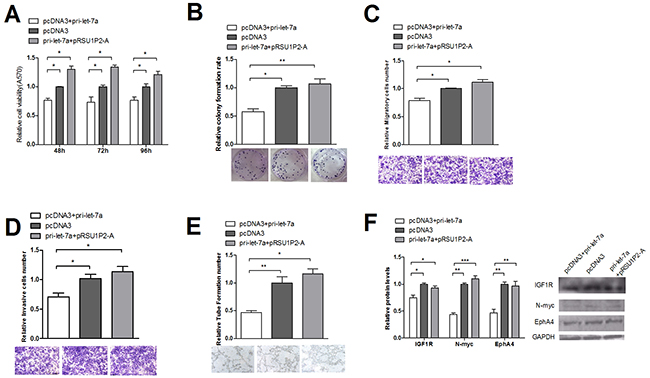 Suppression of let-7a in cervical cancer cells is counteracted by the overexpression of RSU1P2-A.