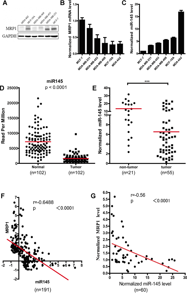 Inverse correlation between the miR-145 and MRP1 expression level in breast cancer.