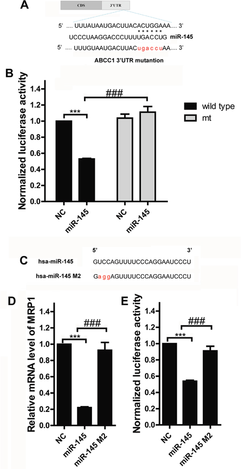 MRP1 is a direct target of miR-145 in breast cancer.