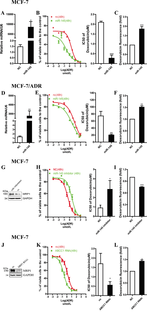 miR-145 regulates drug sensitivity of breast cancer cell lines to ADR through targeting MRP1.