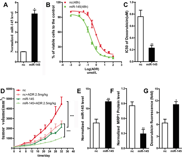 The restoration of miR-145 sensitized MDA-MB-231 cells to doxorubicin in vivo.