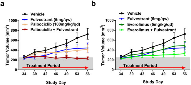 Efficacy of palbociclib or everolimus with fulvestrant in a MCF7-Y537S/KO background.