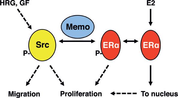 Summary model.