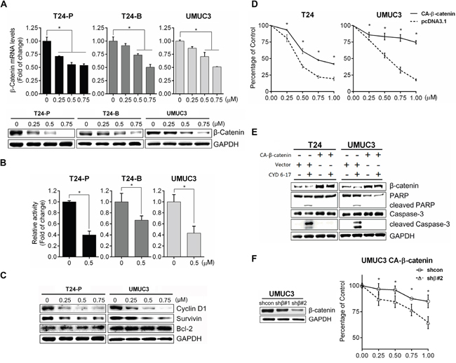 Effect of CYD 6-17 on β-catenin-mediated Wnt pathway.