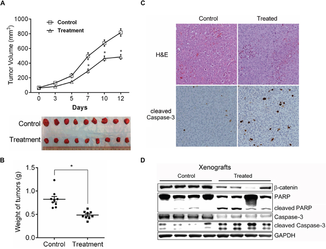 The in vivo effect of CYD 6-17 on tumor growth.
