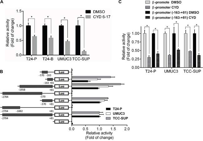 Effect of CYD 6-17 onβ-catenin gene promoter activity.