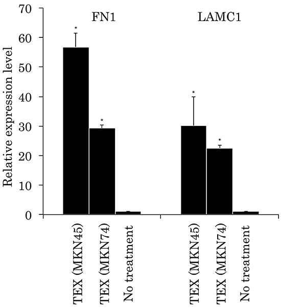 Relative expression levels of FN1 and LAMC1 in TEX-internalized Met-5A cells by qRT-PCR analyses.