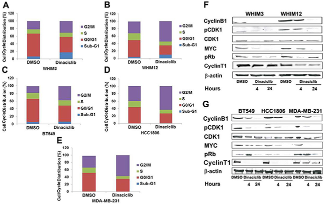 Dinaciclib promotes G2/M phase arrest in TNBC from PDXs and cell lines.