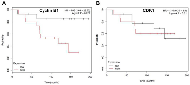 Cyclin B1 expression level negatively correlates with overall-survival rate in patients with ER negative breast cancer.