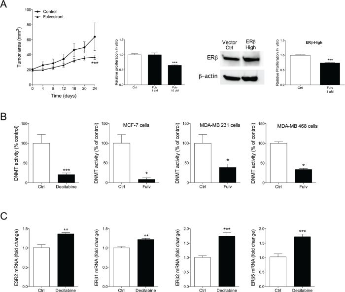 A. Moderate therapeutic effects of fulvestrant in triple negative weak ERβ+ MDA-MB-468.