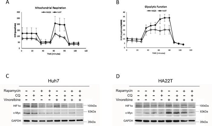 Basal metabolic phenotypes and mitochondrial damage after triplet drug combination treatment.
