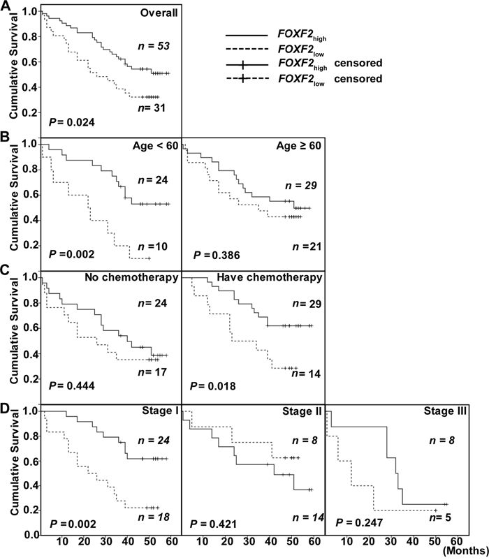Kaplan-Meier survival curves of patients with different FOXF2 mRNA expression.