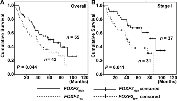 Kaplan-Meier survival curves of patients with different FOXF2 mRNA expression of the independent validation.