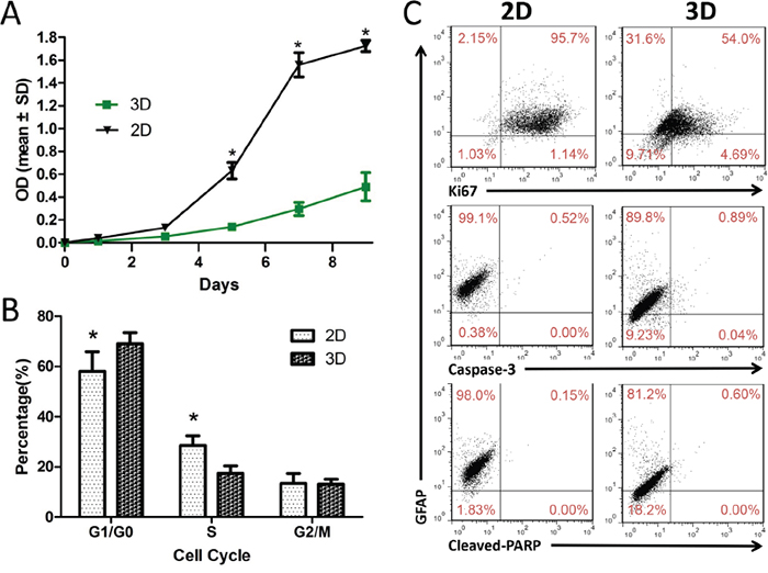 U87 cell proliferation and dedifferentiation in 3D collagen scaffolds.
