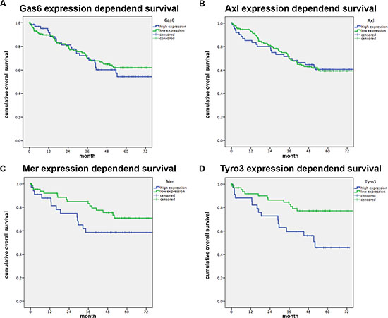 Gas6 and TAM receptor expression correlated to patients survival.