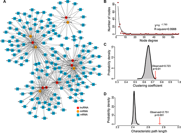 The layout of dysregulated lncRNA-mediated ceRNA network (DLCN) and its structural characteristics
