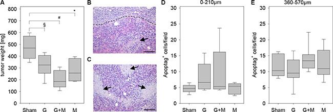 Quantification of tumor weight and cell death.