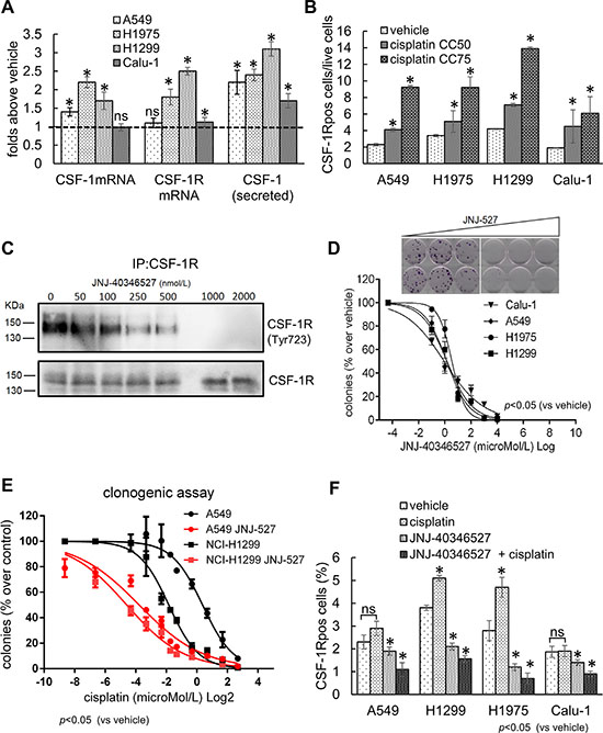 The expression of CSF-1R and its ligand influence the resistance to cisplatin treatment.