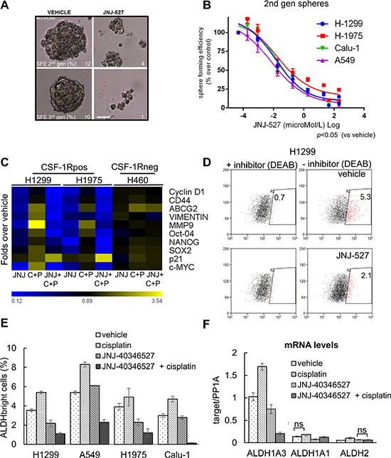 The inhibition of CSF-1R affects some protumorigenic features of lung cancer cells.