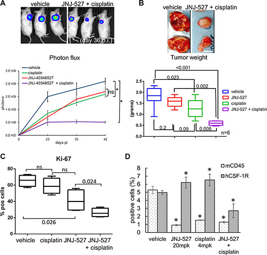 CSF-1R inhibition affects tumor growth.