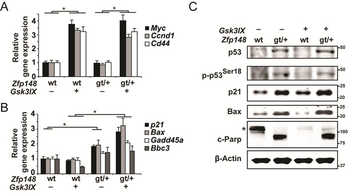Constitutive activation of β-catenin induces p53-activation and apoptosis in small intestine explants from