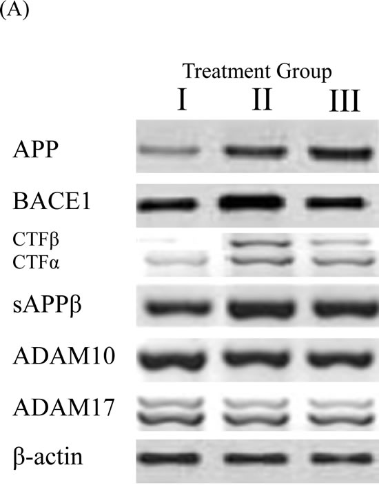 BACE1 and APP processing in brain homogenates detected by Western blot analysis.